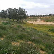 Hessham Elghnnai