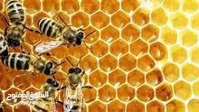 عسل اثل طبيعى للبيع