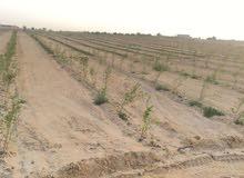 مزرعه للبيع تبعد عن ميدان الرماية 45 كم على طريق القاهرة الفيوم