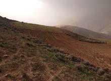 قطعة ارض 5 دونمات من اراضي سوميا ب 30000دينار