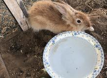 ارنب جميل ذكر