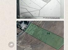 مزرعة مساحتها 27 دونم على شارع القنية الرئيسي وعلى 3 شوارع منها 6 دونمات سكني