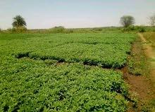 مزرعة 3 فدان للبيع