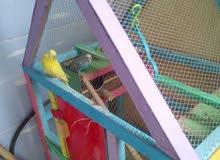 طيور حب وقفص للبيع