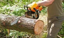 فني تقليم وتنقية وقطع الاشجار