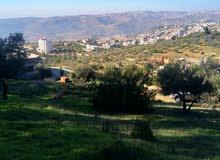 ارض للبيع قرب القصور الملكية - ماحص - دابوق - الفحيص