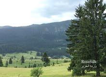 نقدم لكم أفضل العسل من جبال الريف البوسني الجميل الكيلو:15دينار