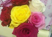 بيع الورد الطبيعي