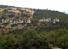 فرصة استثمارية ارض للبيع ساكب جرش 37دونم على قمة جبل مطله على فلسطين سعر الدونم 6 الاف