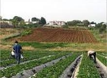 للبيع خمسة  فدان محاصيل زراعيه  فى السويس