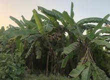 مطلوب ارض زراعيه للايجار فيها ماء وكهربا