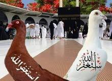 القصاب ابومحمد جميع انواع الغنم والحاشي تقطيع حسب الطلب بجوده عالية التوصيل مجان