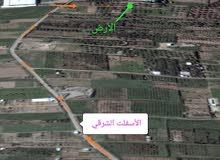 أرض للإستثمار غزة - دوار ملكة جنوبا