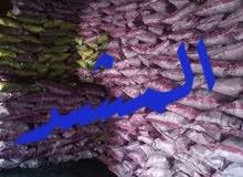 شركة المشد لبيع وتصدير فحم طبيعى
