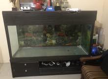 aquarium 1&half mtr huge size