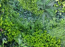 We have Natural and Artificial Plants with high-end specs