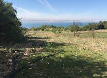 ارض مميزة في البحر الميت (منطقة الزارة)