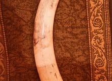 عاج يزن 18 كيلو غرام وأطول من متر للبيع افريقي خامه ممتازه للجادين الفاضي يذكر الله  (طرابلس)
