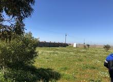 ارض في بوهادي ربع هكتار للبيع بسعر حاررررررق كاش او صك