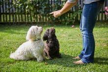 استضافة قطط  وكلاب اثناء سفرك او رحلتك مدد قصير ة او طويلة