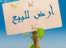 أرض للبيع في أبو نصير 250 متر بسعر 50 الف
