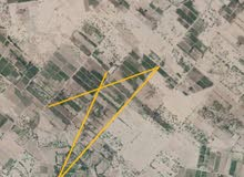للبع مزرعة مانجو بمحافظة أبين بمنطقة الخامله مساحتها 78 فدام وثلاثة ابار ماء