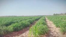 للبيع مزراعة بالتقسيط  بتدفع 50% و الباقي ع سنتين