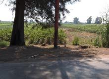 على الطريق مباشر بين طنطا وشيبين الكوم فى قريه صناديد