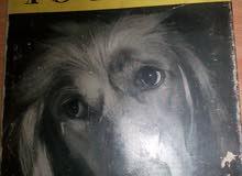 devoted to dogs كتاب نادر