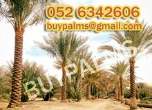 Date Palm Tree Supplies, Planting and Removing,