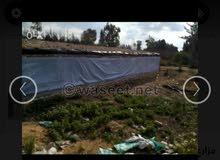 مزرعة دواجن حديثة مكيفة للايجار