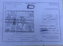 سوق الجمعه سمافرو اوالاد الحاح