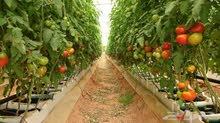 مطلوب مهندس زراعي وسكرتير لشركة زراعية ذات انظمة مائية (هايدروبنك)