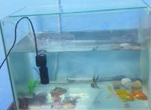 حوض سمك مع 7 أسماك