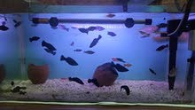 40 Fishes for sale
