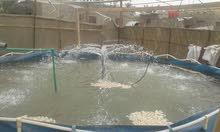 أحواض سمك للبيع مع  ( نافورات وغطاسات وبوريات )العدد4 احواض