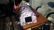 حقائب قطط