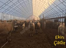 خيمة حيوانات مقاس 13x50 تفقد الجودة بدون وصف.