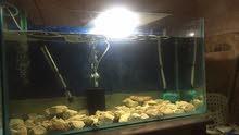 حوض سمك قياس 90س