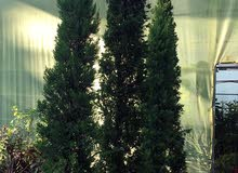 New Natural and Artificial Plants for sale