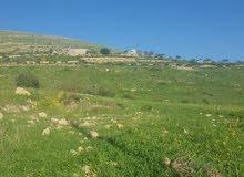 ارض سته دنم في وادي شعيب