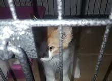 قطه صغيره