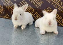 ارانب صغيرة جميلة جدا وسلالات مميزة