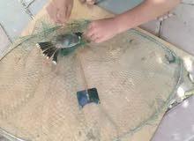 مصايد طيور جاهزه وتفصيل بمقاسات مختلفة واسعار مختلفة