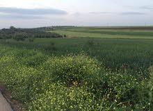 قطعة ارض للبيع بسعر مغري حوض الدن من اراضي بشرى