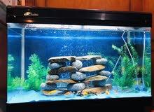 حوض الأسماك مع كامل الأغراض والأسماك  big fish aquarium