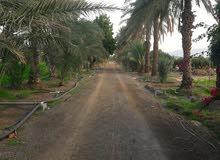 مزرعة علي الشارع العام الفجيرة