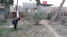 قطعة ارض طابو زراعي في أبو الخصيب عويسيان  المساحه(250)متر
