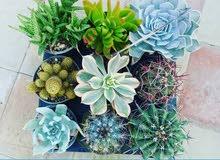 نباتات زينة داخلية وخارجية