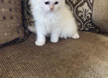 4 months old kitten